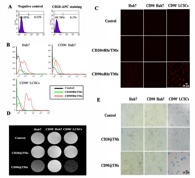 The targeting ability of TMs conjunct specific and non-specific antibody for CD90