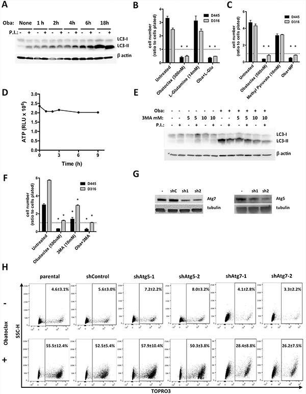 Obatoclax blocks late authophagy, unrelated to cell death.