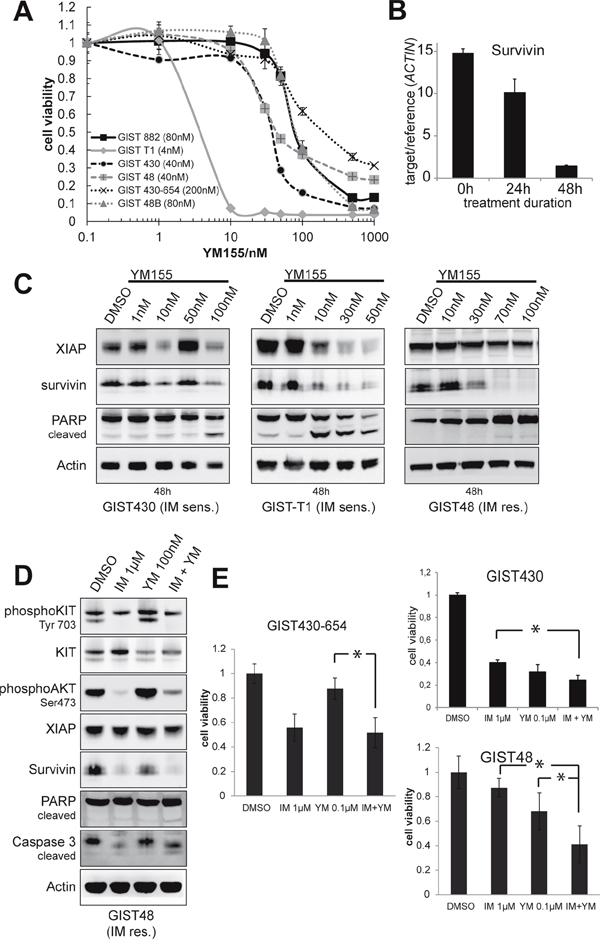 Evaluation of survivin transcriptional repressor YM155.