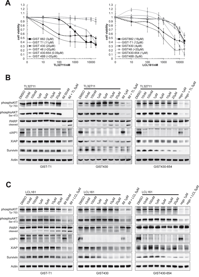 SMAC mimetics TL32711 and LCL161 downregulate XIAP and show agonistic proapoptotic effects when combined with imatinib.