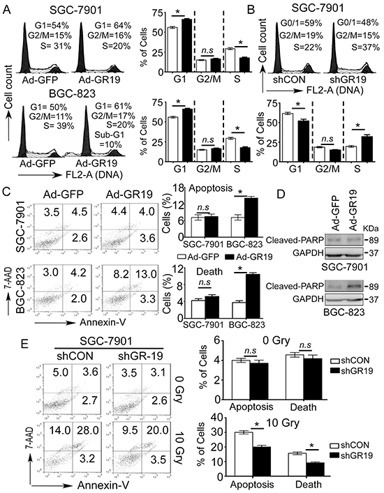 Cell cycle arrest and apoptosis are involved in tumor-suppressive function of GRIM-19.