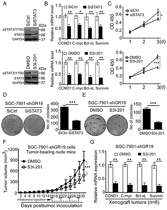 Blockage of STAT3 activation reverses GRIM-19 loss-driven tumor growth in vitro and in vivo.