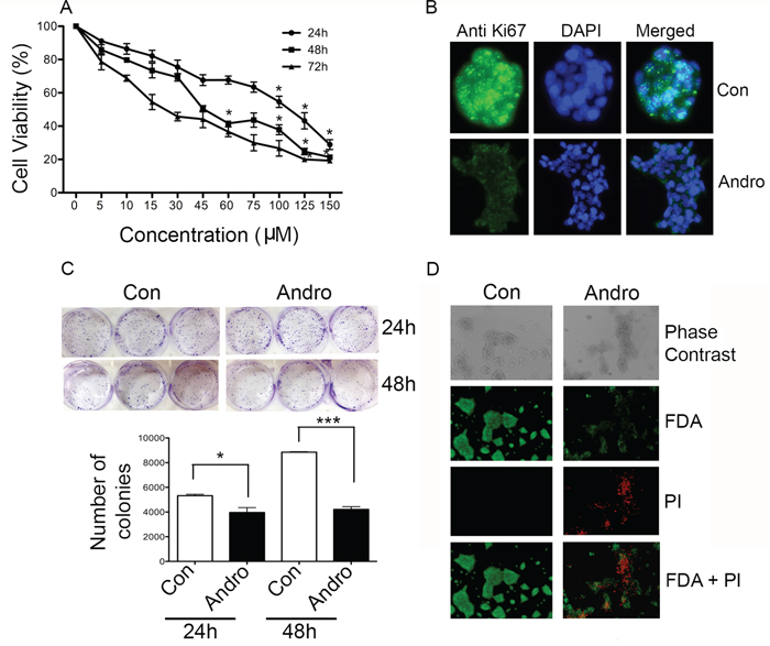 Andrographolide suppresses cell proliferation and clonogenicity in T84 cells.