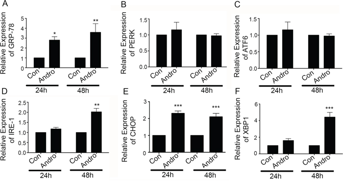 Andrographolide induces ER stress-related IRE-1 and associated proteins.