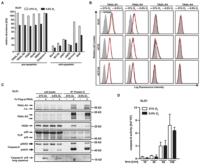 Hypoxia changes the expression levels of pro- and anti-apoptotic proteins but does not impair TRAIL-induced DISC formation.