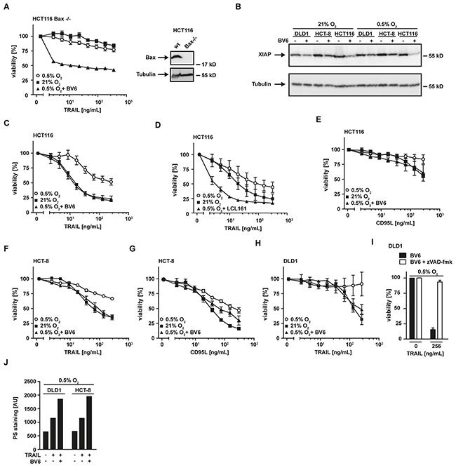 SMAC-mimetics overcome hypoxia-induced apoptosis resistance.
