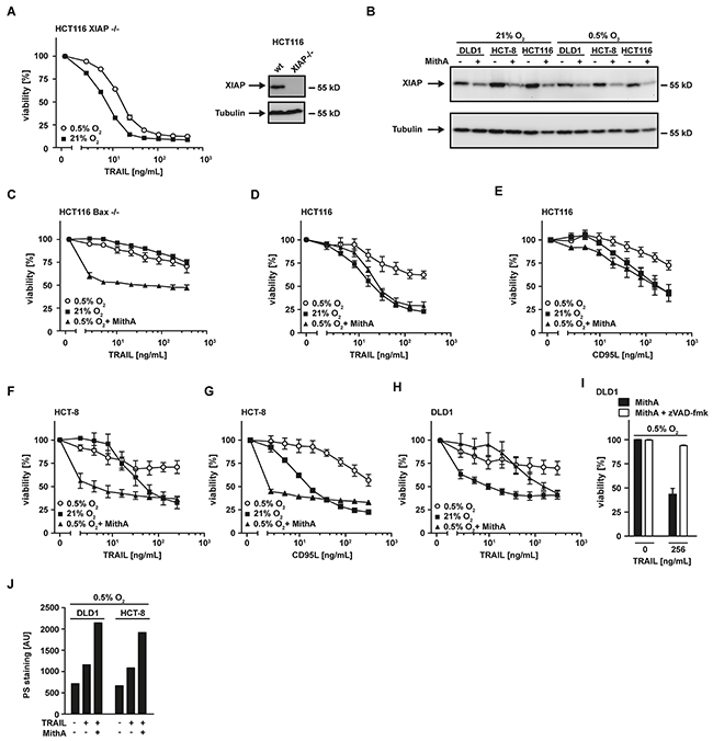 XIAP is critical for hypoxia-induced TRAIL resistance.