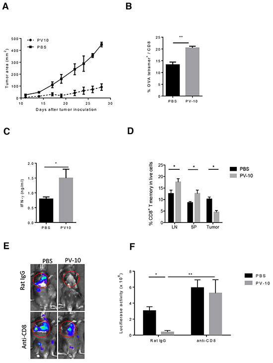 IL injection of PV-10 elicits tumor-specific immunity in melanoma-bearing mice.