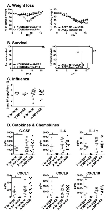 Impact of NP mAb transfer on influenza infection.