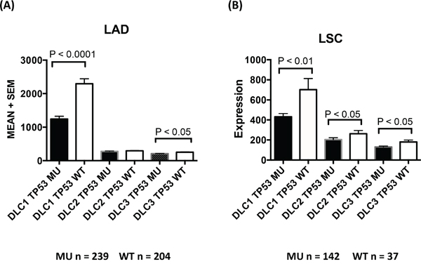 TP53 mutation and DLC expression in lung adenocarcinoma and lung squamous cell carcinoma.
