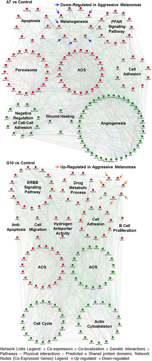 Gene networks associated with signaling pathways and prognostic signatures after reprogramming the AOS network in A7 and G10.