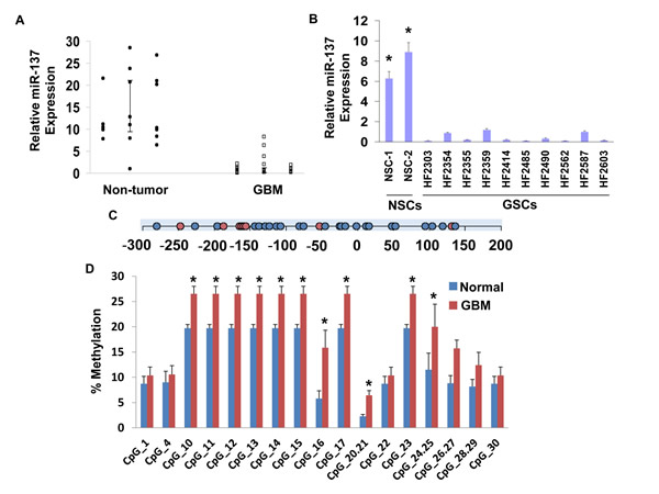 Expression of miR-137 in glial tumors and GSCs.