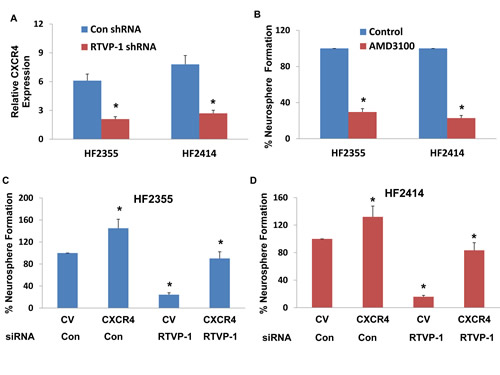 CXCR4 is downregulated in RTVP-1 silenced GSCs and mediates RTVP-1 effects.