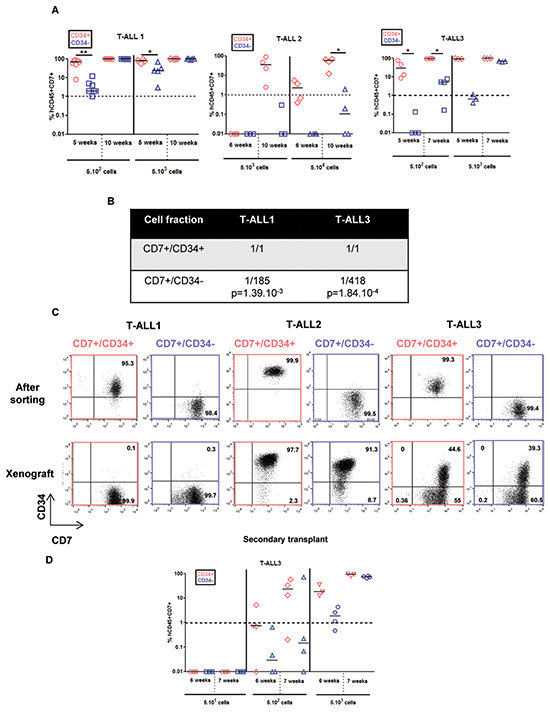 CD7+/CD34+ and CD7+/CD34− cell fractions from 3 fast growing T-ALL samples have different kinetics of leukemia development but leukemic cells derived from xenograft harbouring same phenotype.