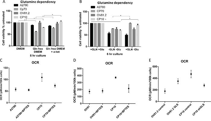 Cisplatin resistant cells depend on glutamine for oxidative phosphorylation.