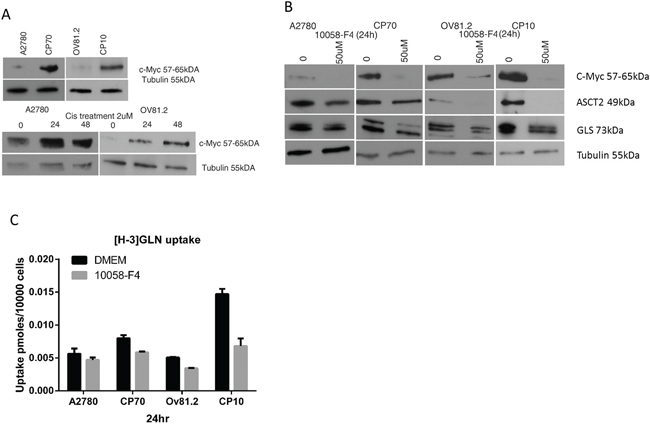 c-Myc regulates glutamine metabolism in cisplatin resistant cells.