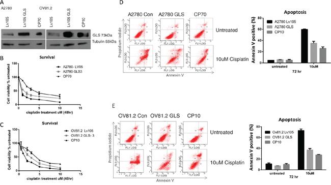 GLS overexpression confers cisplatin resistance.