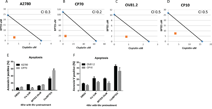 BPTES synergizes with cisplatin.