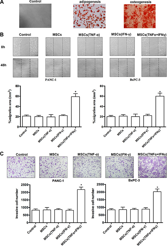 MSCs promoted pancreatic adenocarcinoma cells migration and invasion in vitro.
