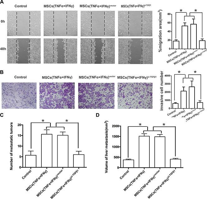 TGF-β1 knockdown of MSCs reverses the EMT in pancreatic adenocarcinoma cells.