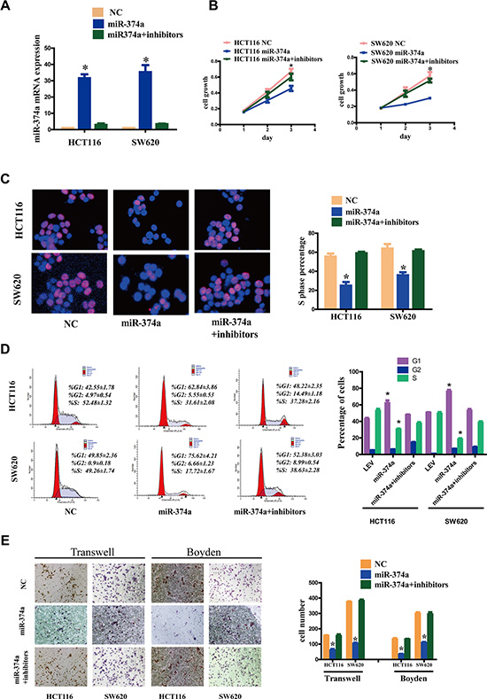 miR-374a inhibition rescues the suppressive functions on proliferation, invasion and migration.