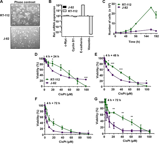 Differential CisPt sensitivity of urothelial carcinoma cells RT-112 and J-82.
