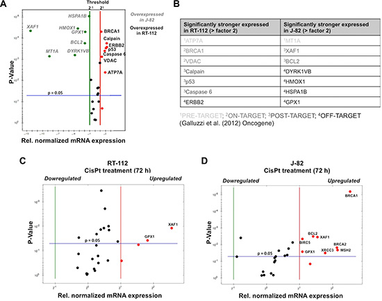 Basal and CisPt-induced mRNA expression of CisPt-related susceptibility factors in UC cells.