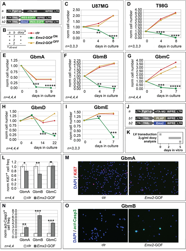 Population dynamics of Emx2 gain-of-function GBM cultures.