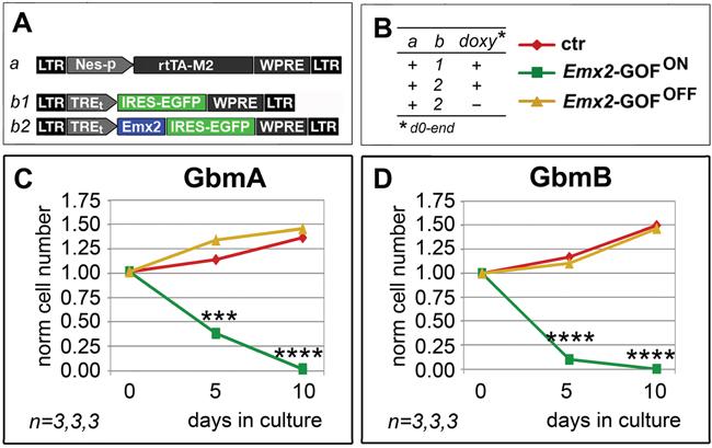 Persisting antioncogenic efficacy of Emx2 upon neural nestin enhancer-restricted overexpression.