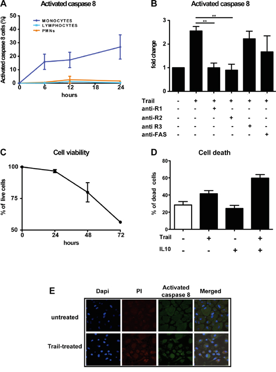 rhTRAIL induces caspase-8 activation and apoptosis selectively in human monocytes and macrophages.