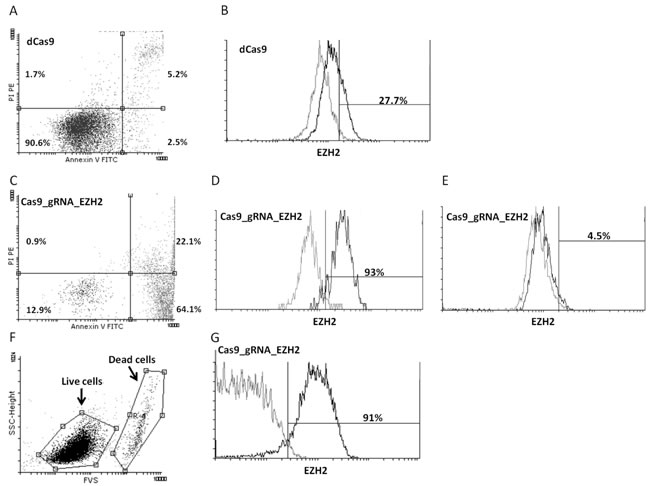 Downregulation of EZH2 expression in MEC1 CLL cells by the CRISPR/Cas9 approach leads to apoptosis.