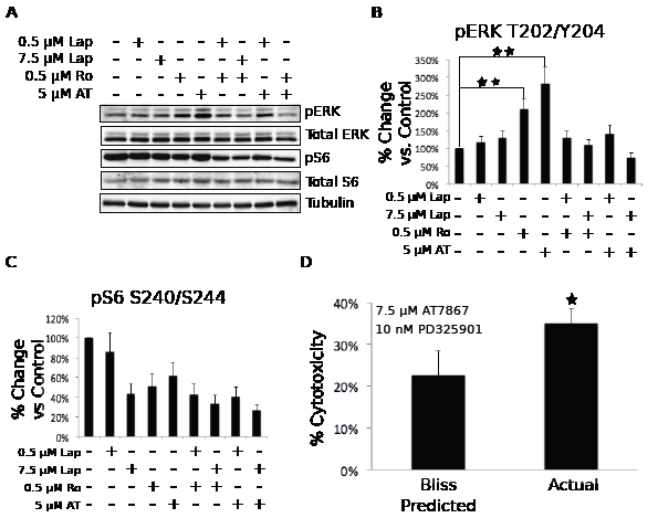The loss of p70S6K signaling results in the compensatory activation of MEK/ERK signaling through an EGFR-dependent mechanism.