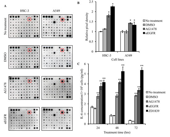 IL-6 is increased in cancer cells treated with EGFR-TKI.