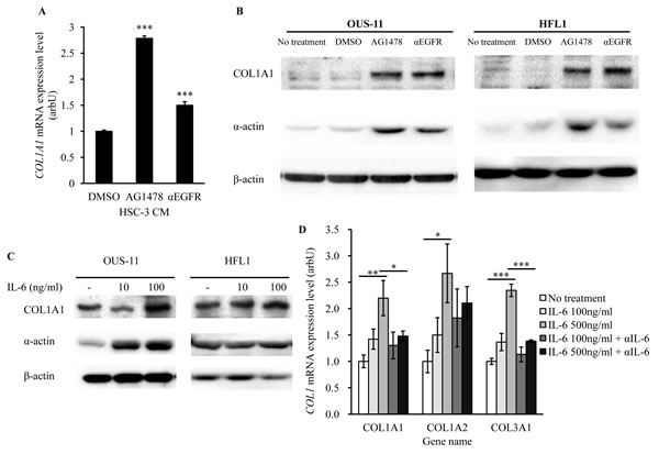 EGFR-TKI and IL-6 increase the expression of fibrosis markers.