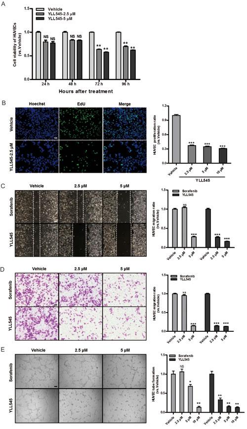 YLL545 inhibits HUVEC proliferation, migration, invasion, and tube formation.