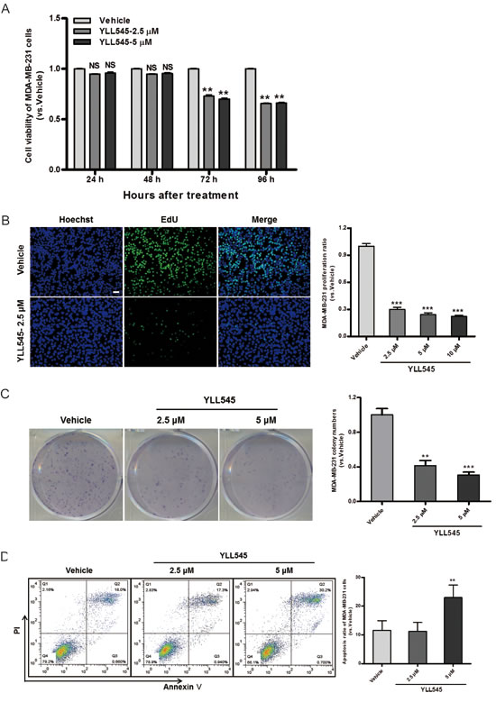 YLL545 inhibits tumor cell growth