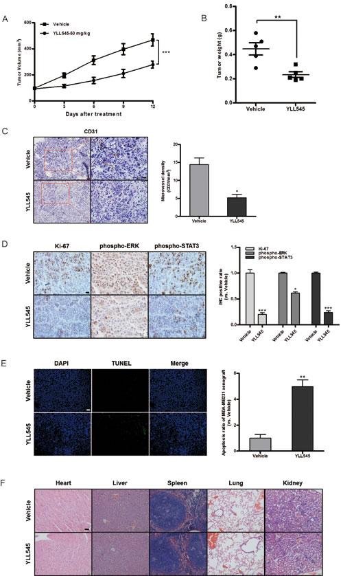 YLL545 exerts antitumor activities