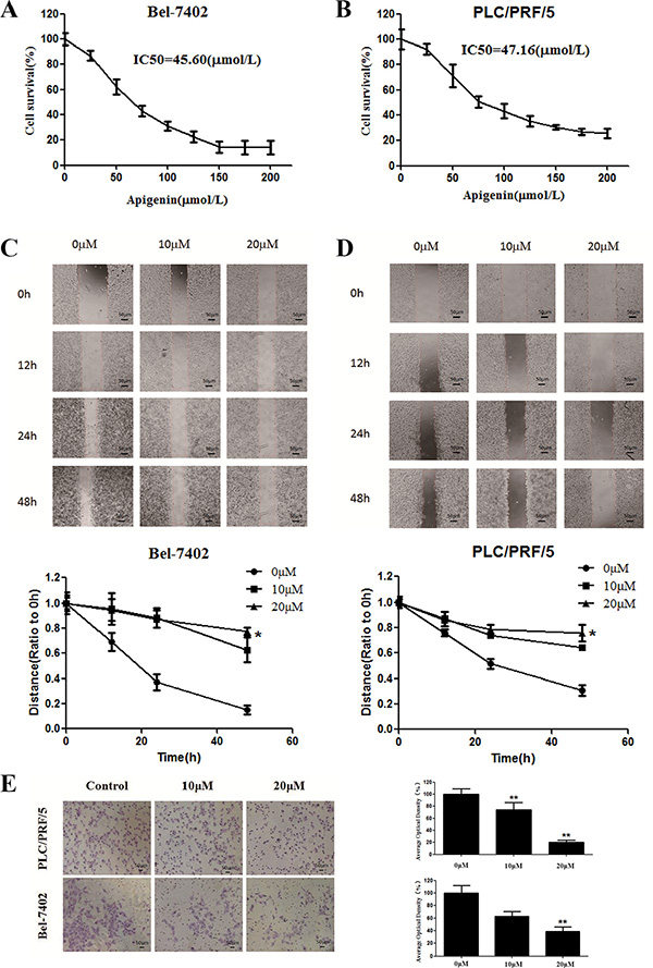 Effects of apigenin on cell viability and migration.