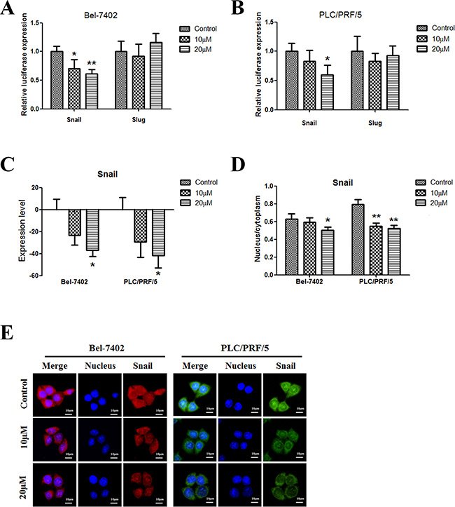 Apigenin inhibits snail in human liver cancer.