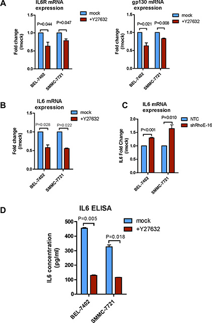 Rho/ROCK signaling regulates expressions of IL-6 receptor and IL-6.