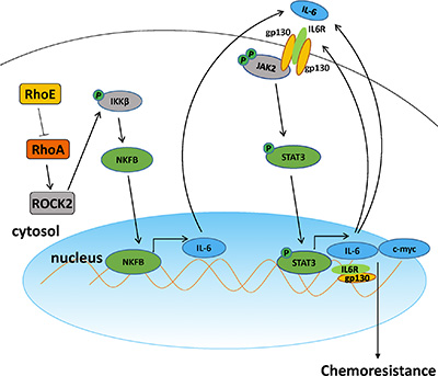 A schematic model of Rho/ROCK promoting chemoresistance in HCC.