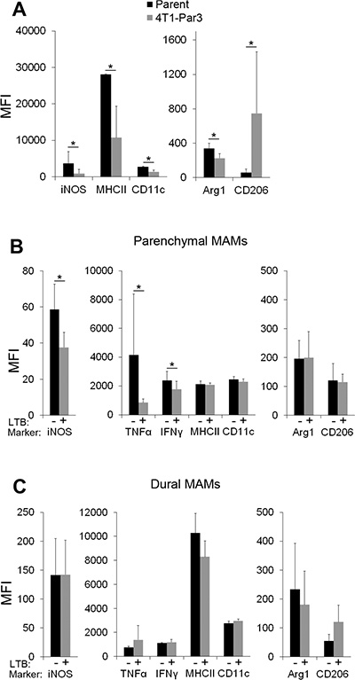 Cancer cell-derived factors contribute to site-specific polarization of parenchymal MAMs.