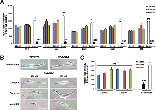 TAT-FITC uptaken by cultured cells and primary cells treated with glucose, sucrose and manntiol combination.