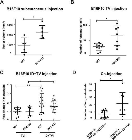 PF4 inhibits tumor growth and metastasis of B16-F10 melanoma.