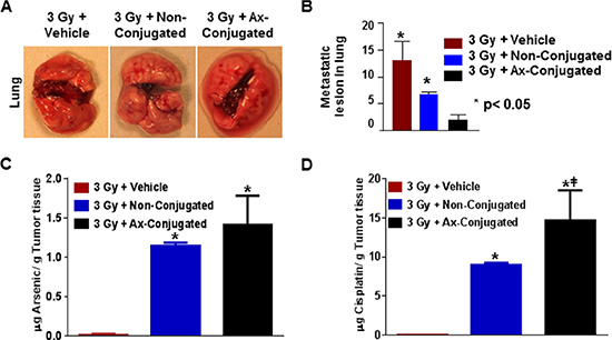 The combinatorial nanotherapeutic strategy results in inhibition of lung metastasis with increase in Arsenic and cisplatin accumulation in the murine tumor model for TNBC.