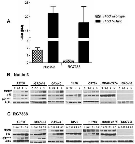 The sensitivity to MDM2 antagonists, Nutlin-3 and RG7388, in a panel of wild-type and mutant TP53 ovarian cancer cell lines.