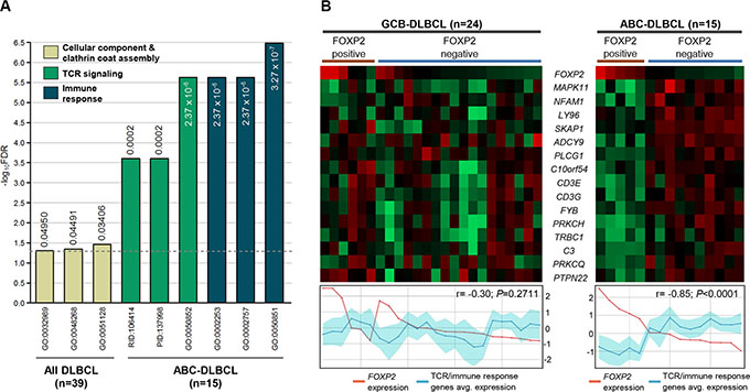TCR signaling and immune response signatures were significantly reduced in FOXP2-positive ABC-DLBCL cases.