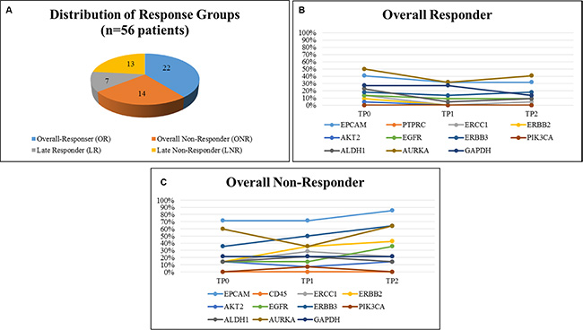 Distribution of response groups and comparison of gene expression in OR and ONR.