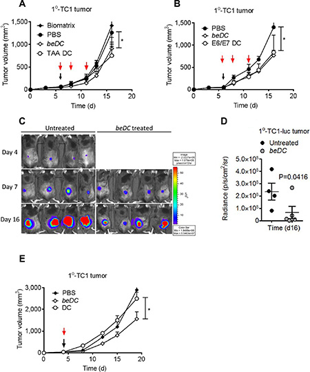 Treatment of TC1 primary (1°) tumors using DCs-in-scaffolds (beDC) or free DCs.