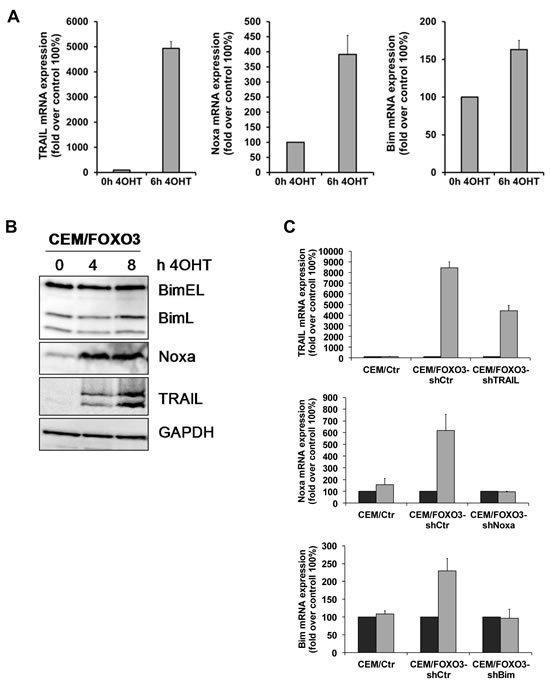 TRAIL and Noxa are critical mediators of FOXO3-induced apoptosis in T-ALL cells.